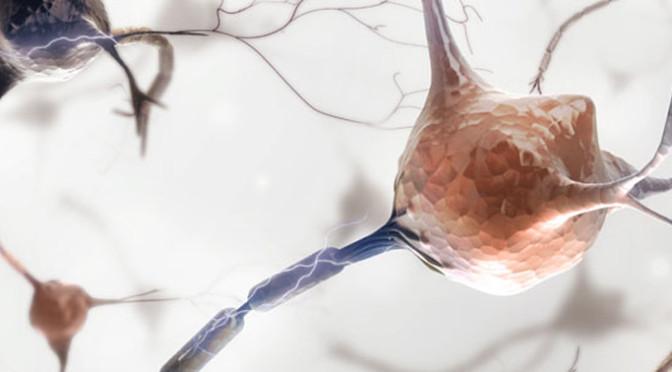 """Das """"Programm der Neuromotivation"""" – Wissenschaftliche Grundlagen"""